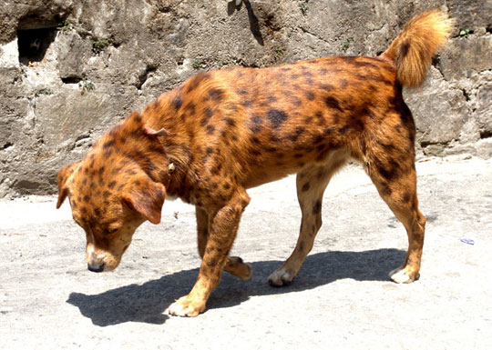 cool-spotted-dog-rock-cougar
