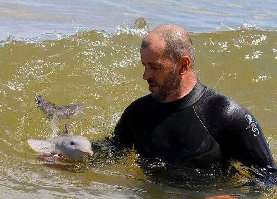 cute-baby-dolphin-sea-trainer-wave