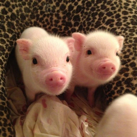 Please Don't Turn Us Into Bacon