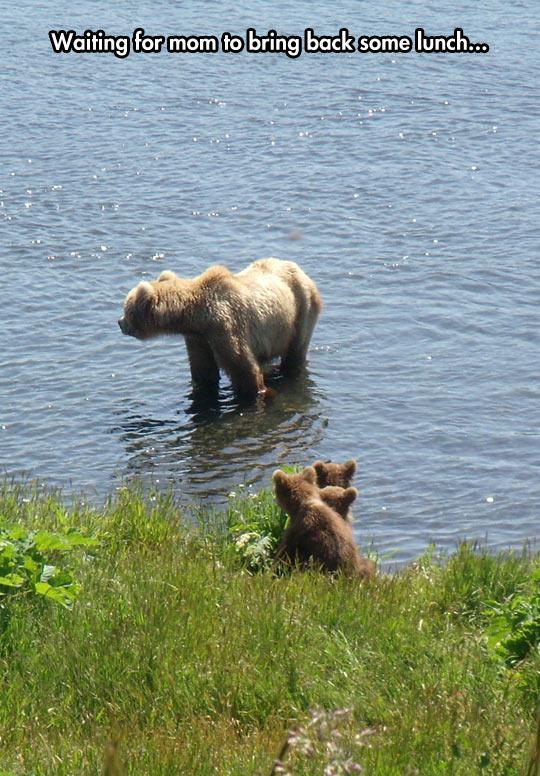 cute-bear-cubs-lake-waiting-mom