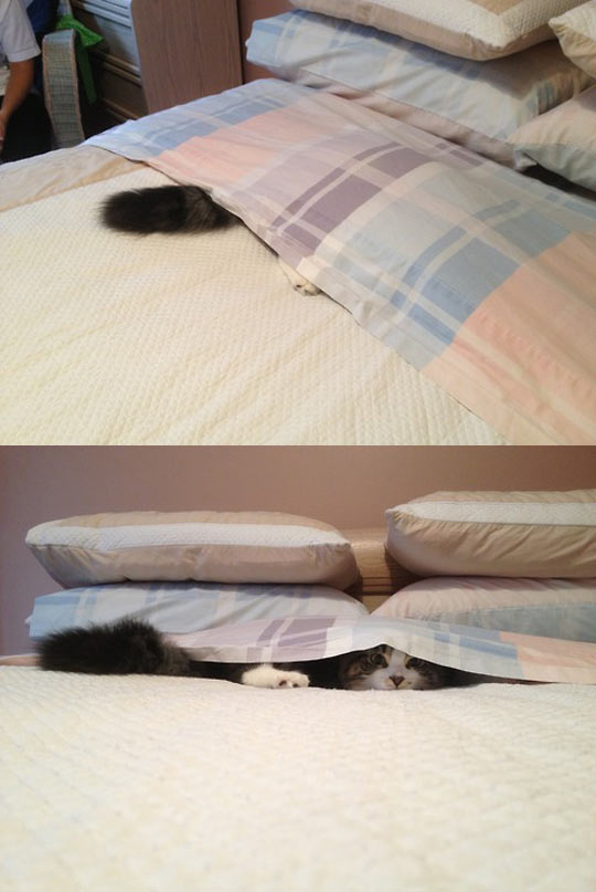 cute-cat-helping-hiding-bed-sheets