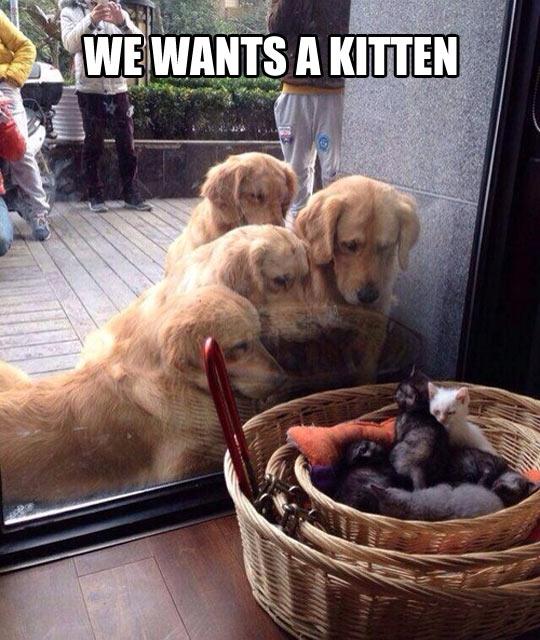 cute-dogs-staring-kittens-window