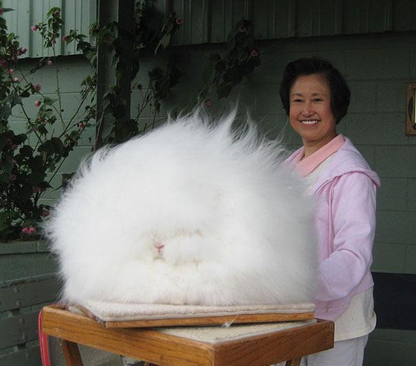cute-fluffy-animals-21