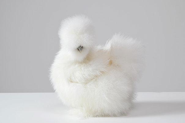cute-fluffy-animals-22