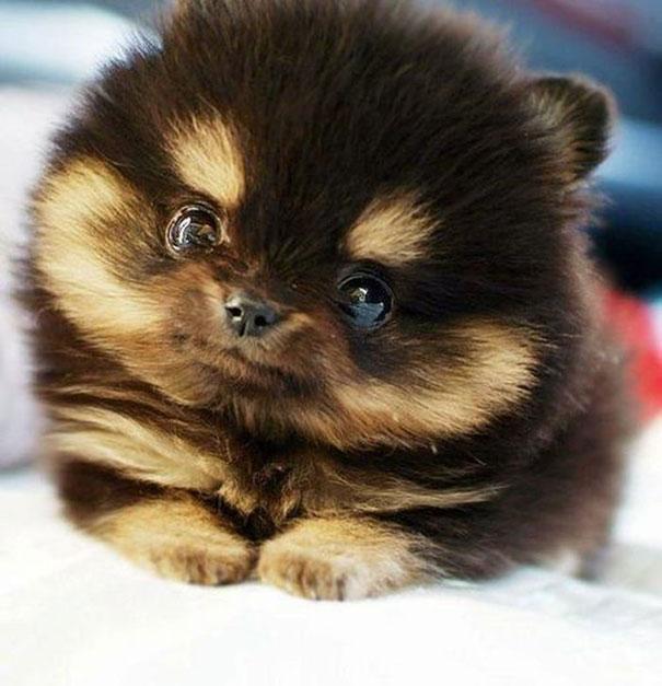 cute-fluffy-animals-26