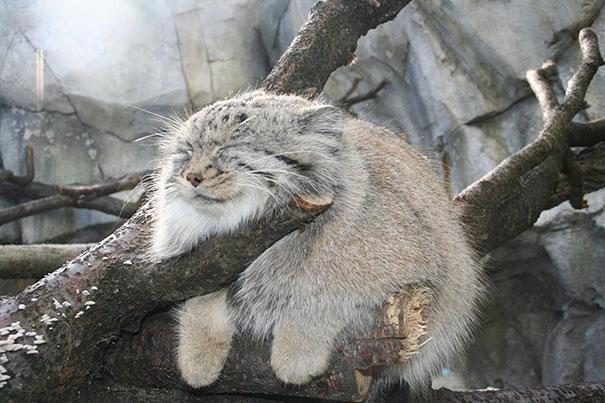 cute-fluffy-animals-32