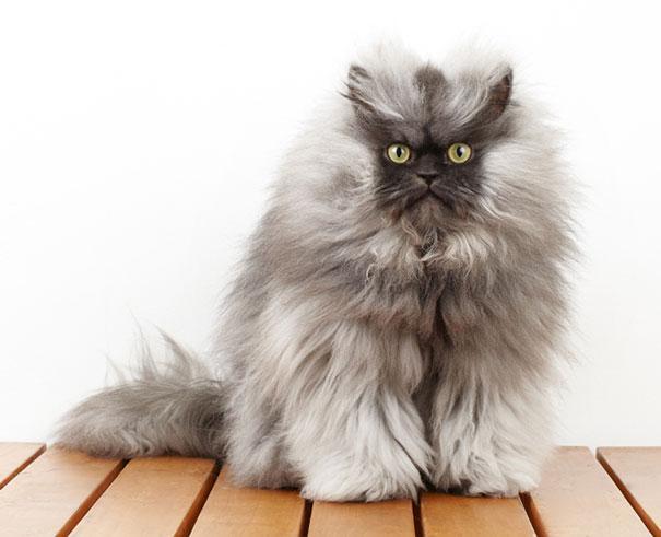 cute-fluffy-animals-36