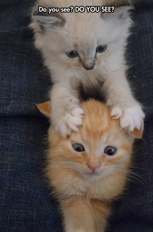 cute-funny-kitty-paw-eyes-kitten