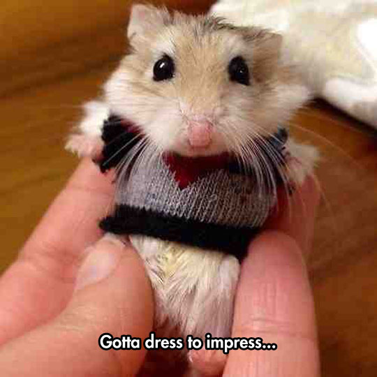 cute-hamster-sweater-small-clothes