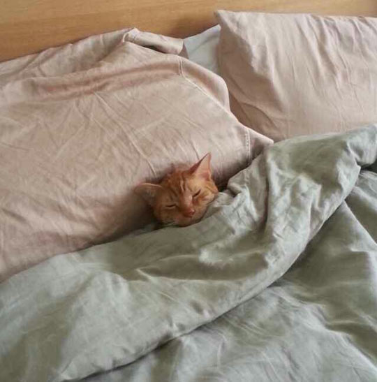 He Tucked Himself In