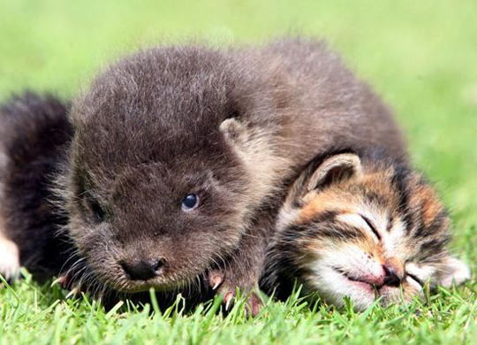 cute-otter-kitten-hugging-warmth-grass
