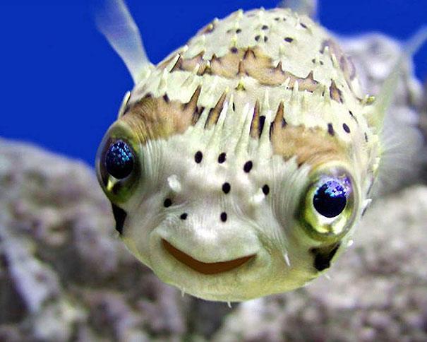 cute-smiling-animals-1