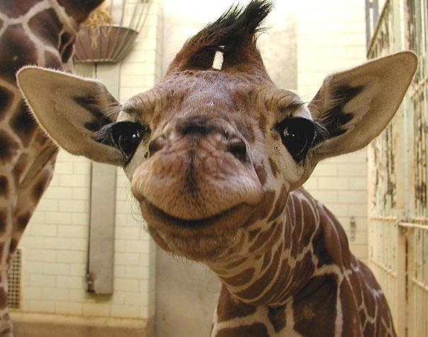 cute-smiling-animals-11