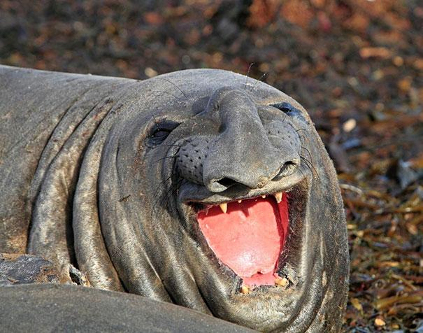 cute-smiling-animals-3