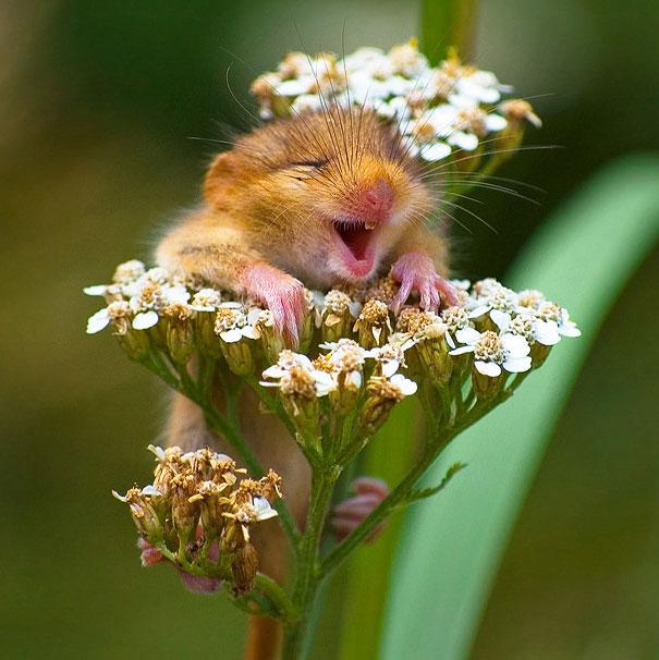 cute-smiling-animals-33