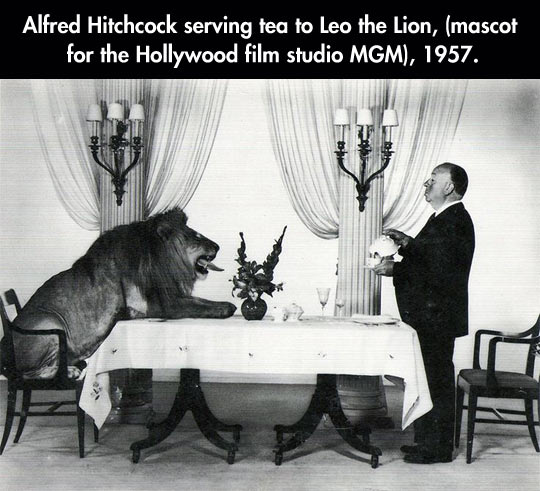 funny-Alfred-Hitchcock-serving-tea-Leo-the-lion