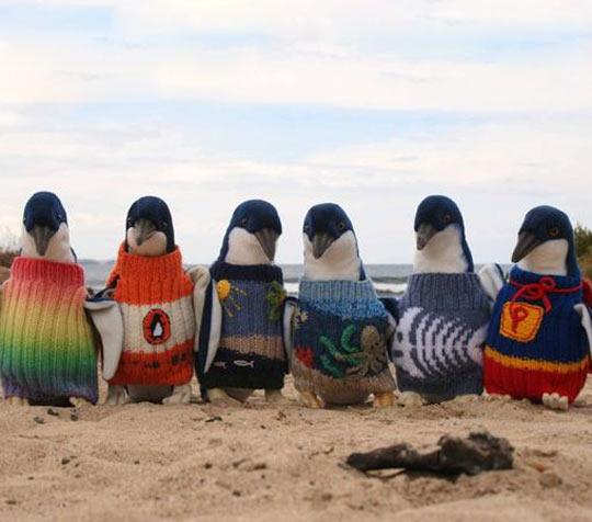 funny-Antarctica-penguins-wearing-sweaters