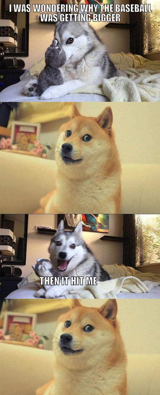 funny-Doge-Husky-pun-baseball