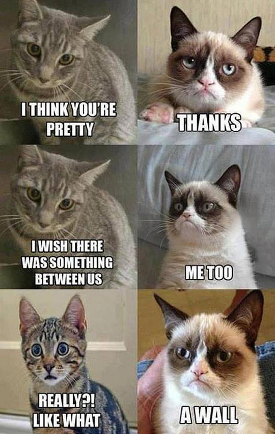 funny-Grumpy-Cat-wall-between-separation