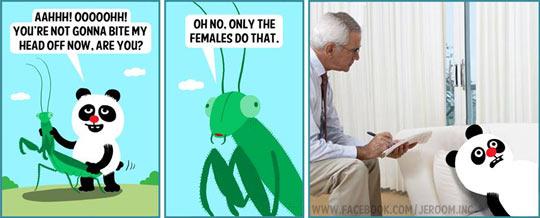 funny-Jeroom-panda-praying-mantis-female-joke