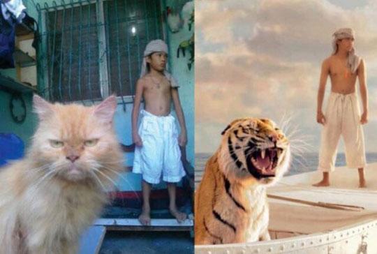 funny-Life-of-Pi-tiger-cat