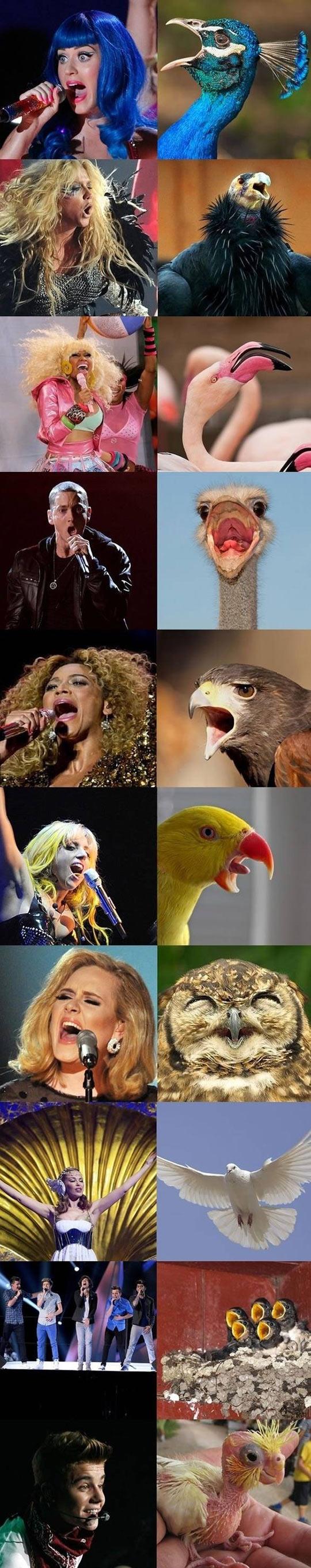 funny-Popstars-singers-birds-Eminem-Justin-bieber