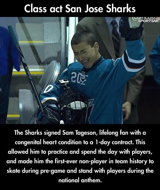 The Best Day Of a Shark's Fan