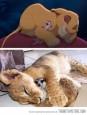 Real Simba and Timon