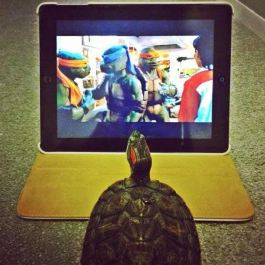 Teenage Mutant Ninja Turtle wannabe…