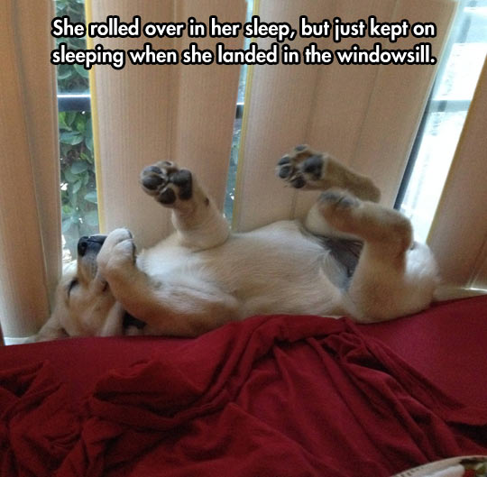 funny-baby-dog-sleeping-rolling