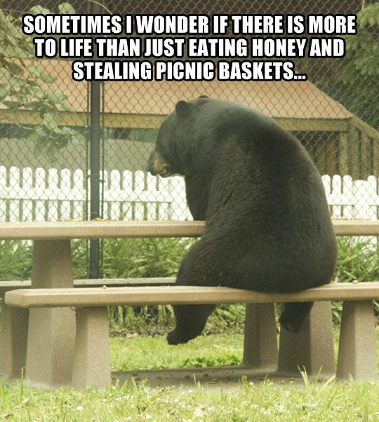 Existentialist Bear