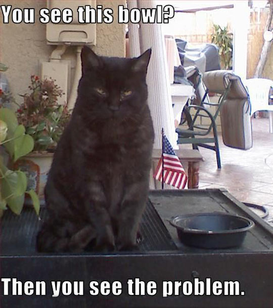 funny-black-cat-bowl-empty