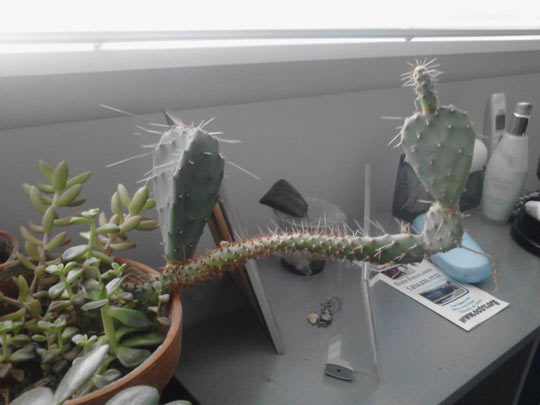 funny-cactus-rude-gesture-prick