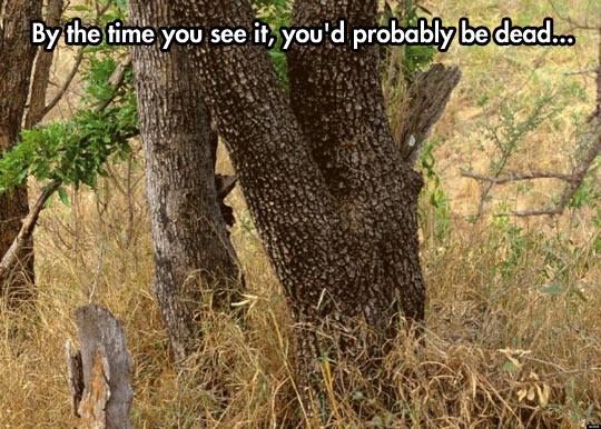 Spot the spots on the spot…