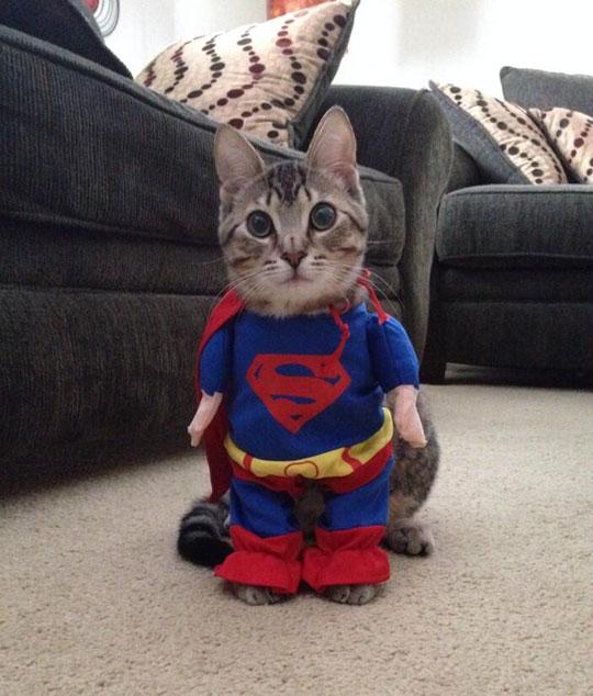 I Present You, Supercat