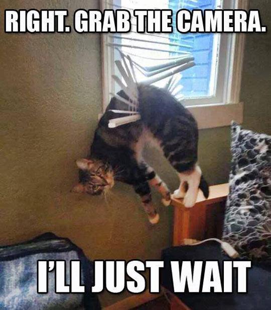 funny-cat-blind-broken-hanging