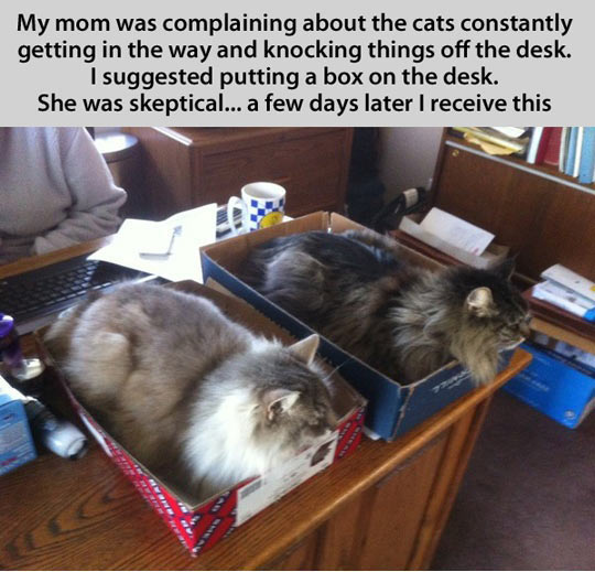 The infallible cat trap…