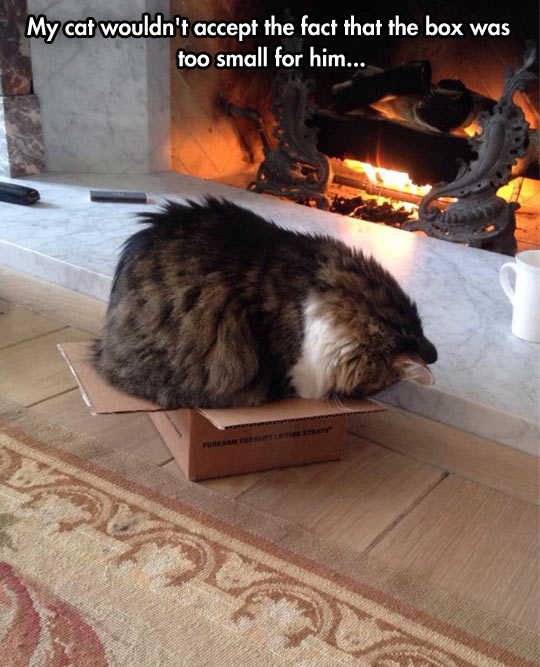 Doesn't fit, still sits…