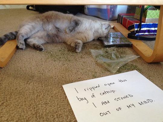 funny-cat-catnip-note-ripped-bag