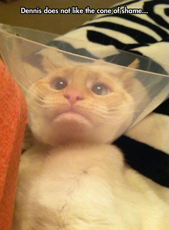 funny-cat-cone-shame-neck