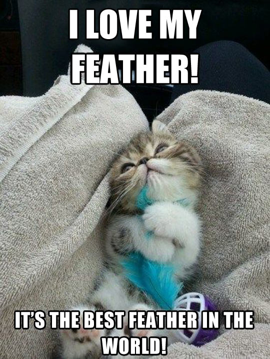 This Is My Feather. There Are Many Like Them, But This One Is Mine