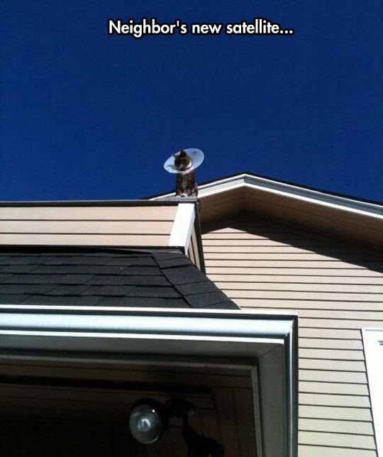 funny-cat-house-satellite-dish-cone