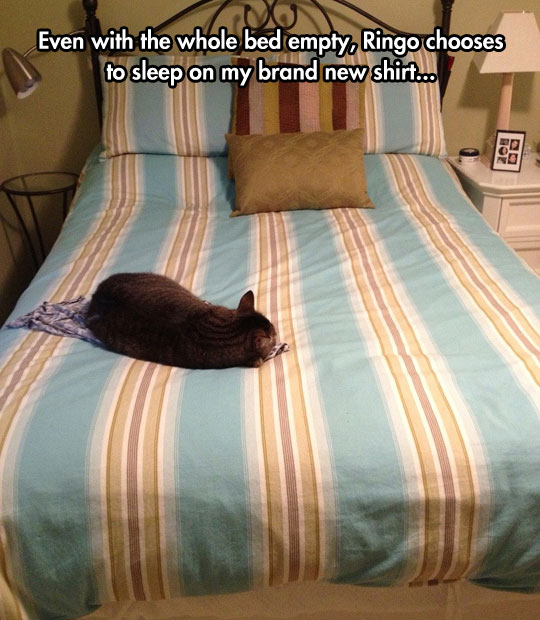 funny-cat-laying-bed-new-shirt