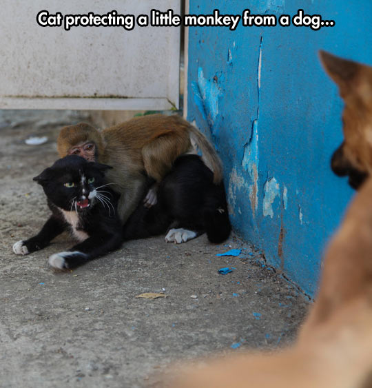 funny-cat-monkey-dog-protecting