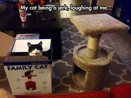 Cats Always Find a Way To Get In Your Nerves