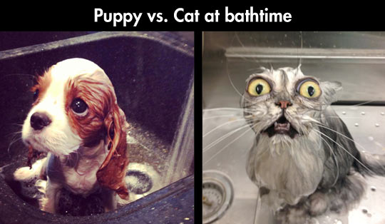 funny-cat-puppy-bath-sink-water
