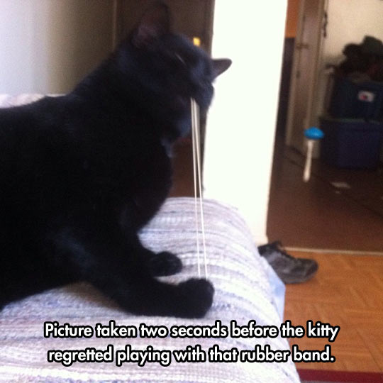 funny-cat-rubber-band-playing-bed