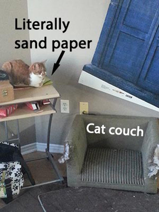 Everything Is a Cat Couch