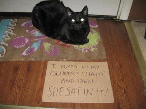 funny-cat-shaming-15
