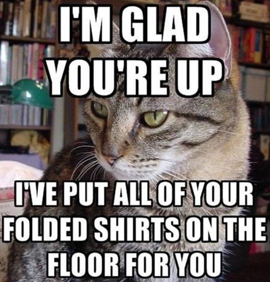 funny-cat-shirt-folded-floor